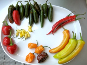 Clockwise from top: red Jalapeno, regular Jalapeno, Thai chiles, Banana peppers, Habeneros, red Cherry peppers, and little...