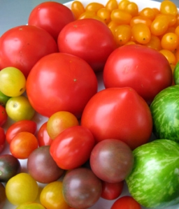 A plethora of tomatoes from the Farmers Market: multi-colored heirloom cherry tomatoes, Green Zebras, yellow grape and bright red Early Girl tomatoes.